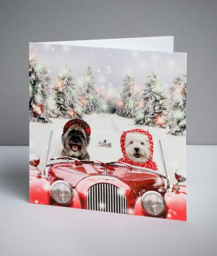 Hector and Hetty Christmas Cards, Pack of 20