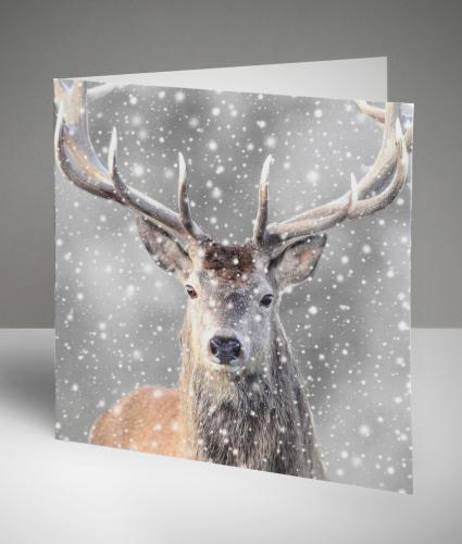 Magnificent Stag Christmas Cards, Pack of 10