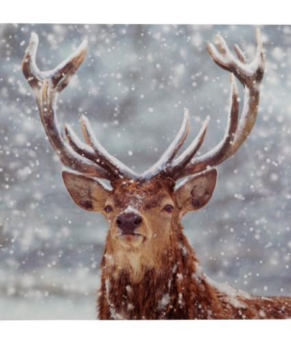 Solo Stag Christmas Cards - Pack of 20