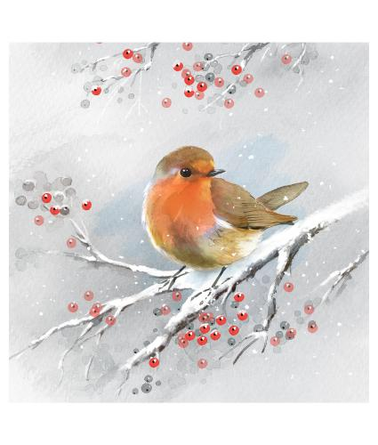 Robin on a Branch Christmas Cards - Pack of 10