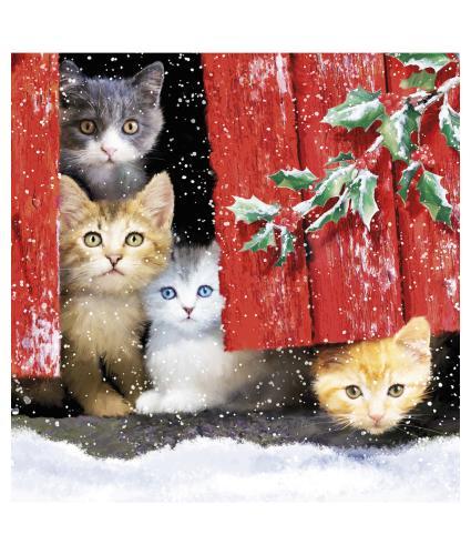 Peeking Through The Door Christmas Cards - Pack of 10
