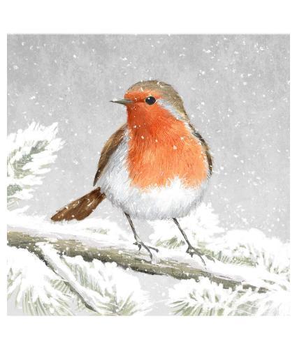 Robin Soft Illustration Christmas Cards - Pack of 10