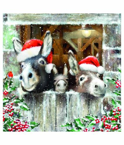 Donkey Trio Welsh Bilingual Christmas Cards - Pack of 10
