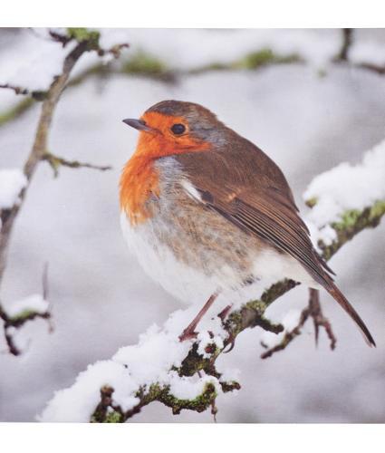 Festive Robin Christmas Card