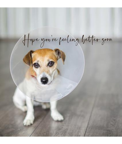 Cone of Shame Get Well Greetings Card