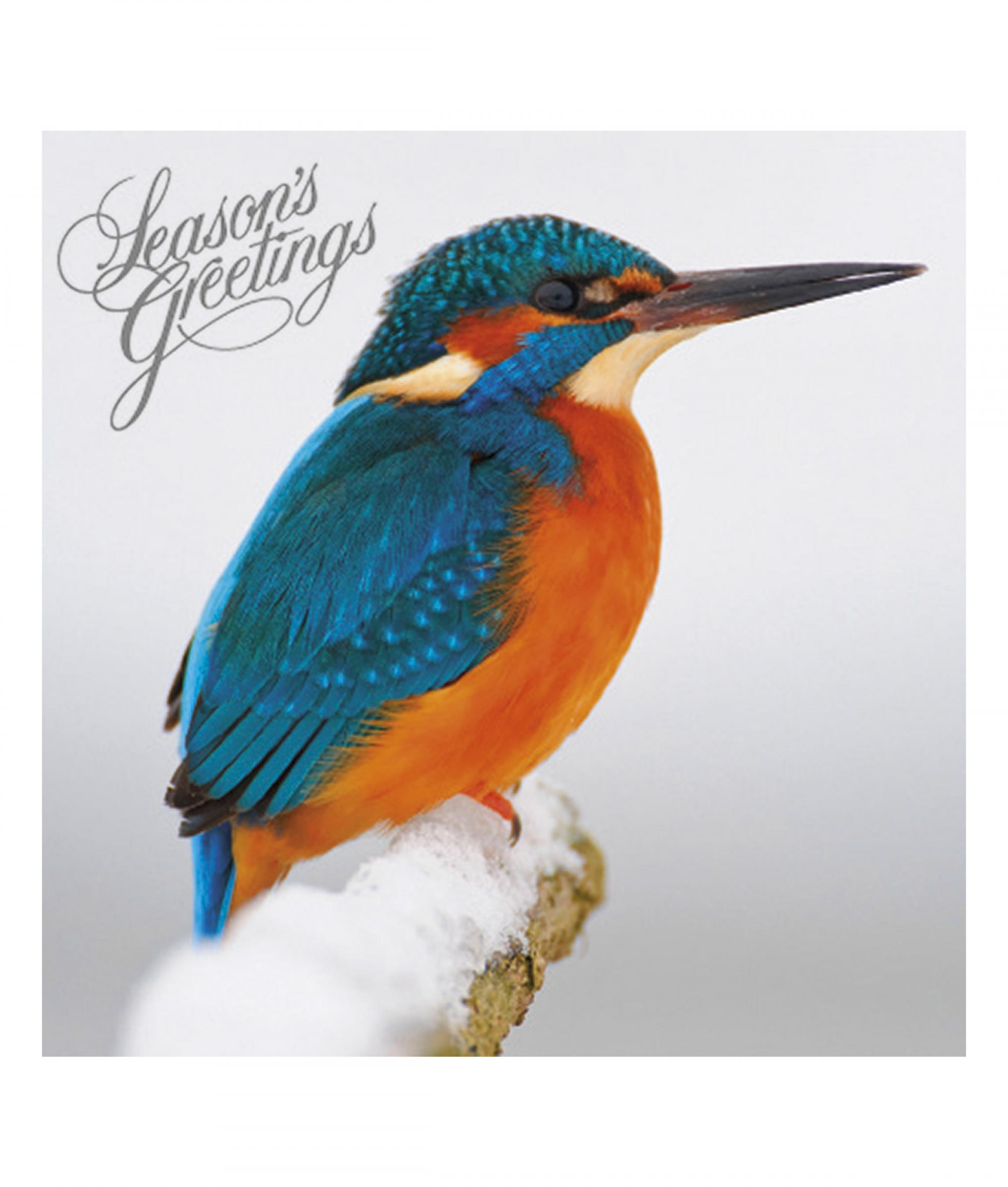 Magnificent Monarch Christmas Card - Pack of 10 | Cancer Research UK ...