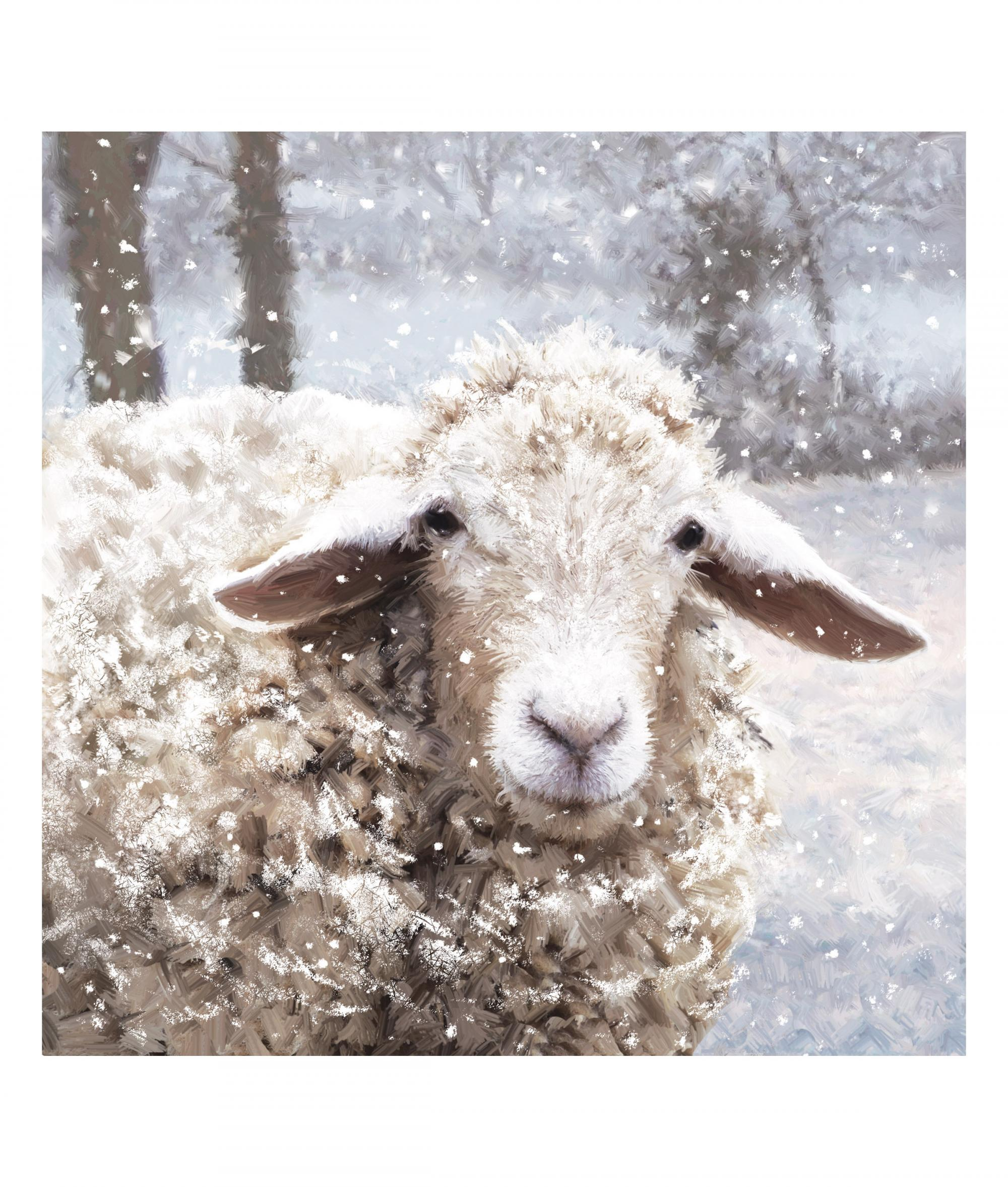 Baaarney the Sheep bi-lingual Christmas Card - Pack of 10 | Cancer ...