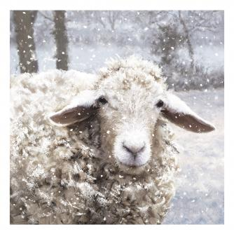 cancer research baarney the sheep christmas card