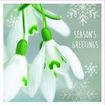 sparkly snowdrops cancer research uk christmas card