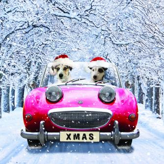 chip and charlie bi-lingual cancer research uk christmas card