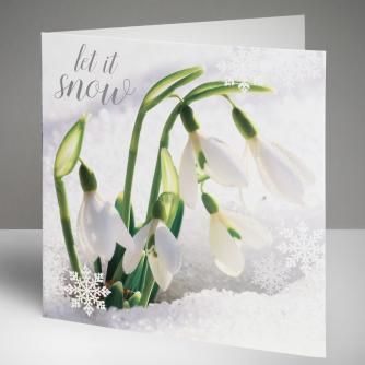 Snowdrops in Snow Christmas Cards, Pack of 10