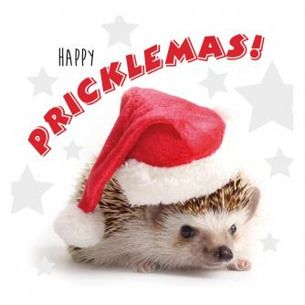 Mr Prickles Christmas Cards - Pack of 10