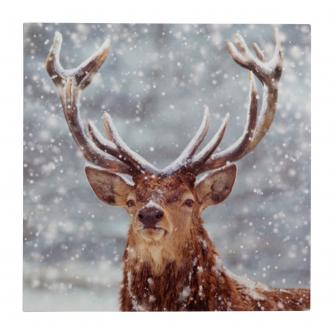 solo stag christmas cards pack of 20 - Animal Charity Christmas Cards