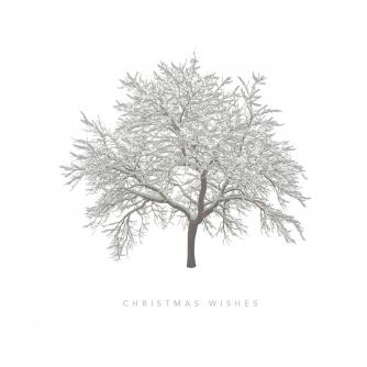 Frosty Tree Christmas Cards Packs Of 10 Or 20 Cancer Research Uk Online Shop