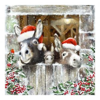Donkey Trio Christmas Cards - Pack of 10