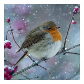 Rotund Robin Christmas Cards - Pack of 20