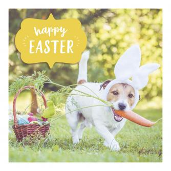 Bunny's Treats Easter Cards - Pack of 6