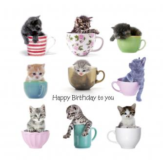 Kittens In Cups Birthday Card