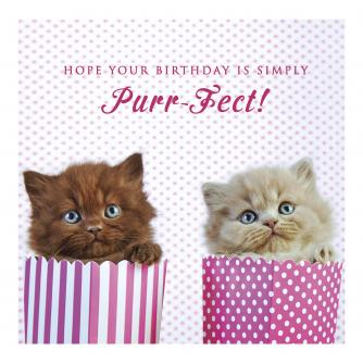 Paper Bag Purr-fect Kittens Birthday Card