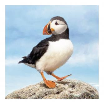 Magnificent Puffin Greetings Card