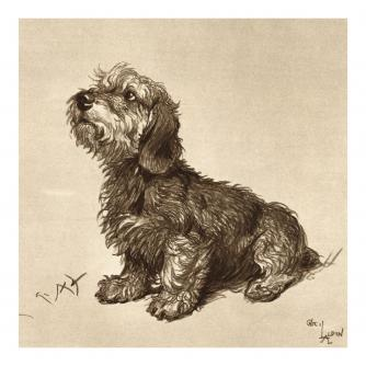 Ticked Off Dandie Dinmont Greetings Card