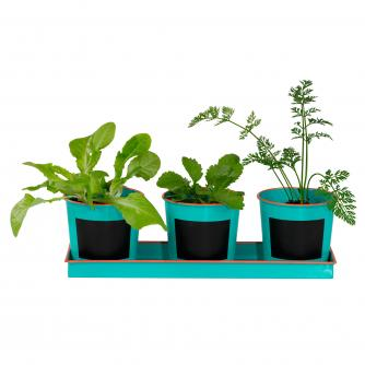 Kids Vegetable Gardening Pots & Seeds Set