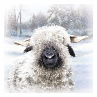 baatholemew cancer research uk christmas card