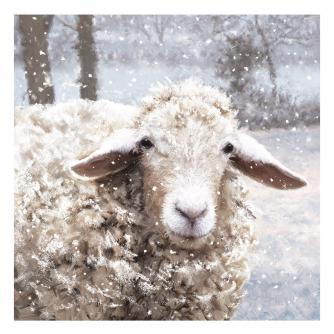 baaarney the sheep bi-lingual cancer research uk christmas card