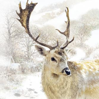 Solitary Stag Cancer Research Christmas Card