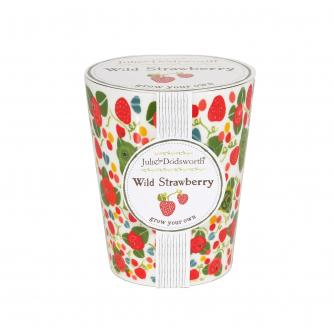 Grow Your Own Wild Strawberry Pot